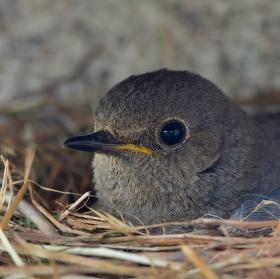 Hnízdo (Očekávání potomků)