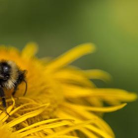 Léto a pilné včelky