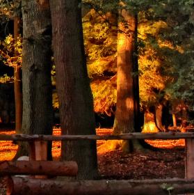 Na sklonku dne s posledním slunečním pohlazením les ukládá se k spánku