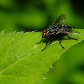 Moucha na listě
