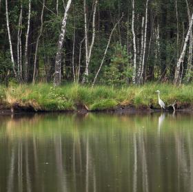 Zátiší našeho rybníčku