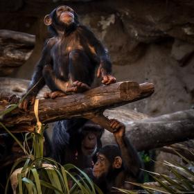 Opičáci v Loro Parque Tenerife