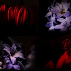 Květiny od muže
