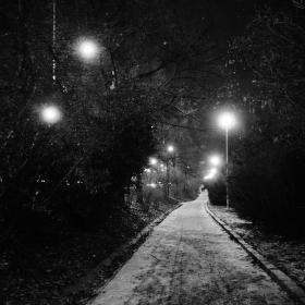 Noční cesta parkem Lužánky