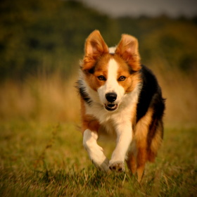Běhání je radost