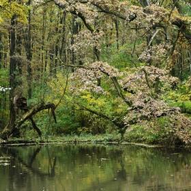 Jazierko v lesíku