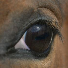 Pohled kone