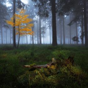 Jesenické ticho