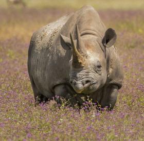 Jsem úplně malinký nosorožec a chce se mi spinkat