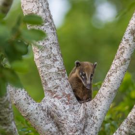 Jak dlouho budeš pod tím stromem otravovat?