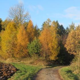 Barvy podzimu.