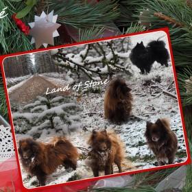 Vánoční přání od smečky Z kraje kamenů