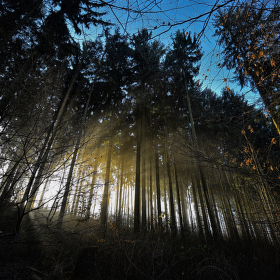 Světlo mezi stromy