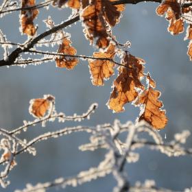 Novoroční příroda