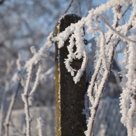 zima u nás ve vinohradě