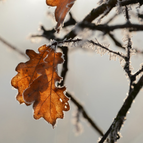 Zimní světlo