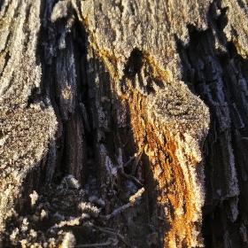 Struktura dřeviny