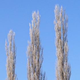 Stromy u silnice