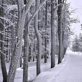 Cesta na Čerchov