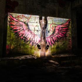 Křídla v lesích Krušných hor