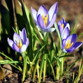 Príchod jari