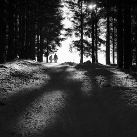Kdo se bojí nesmí do lesa...