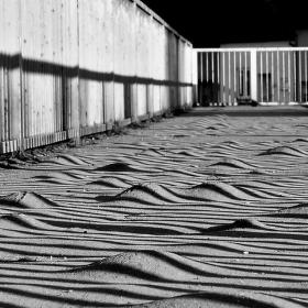 Schované zebry