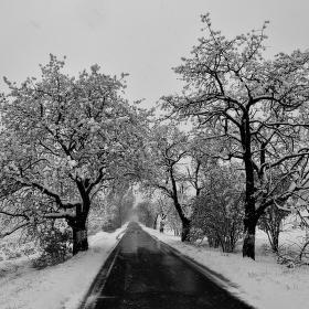 Čerešničky pod sněhem