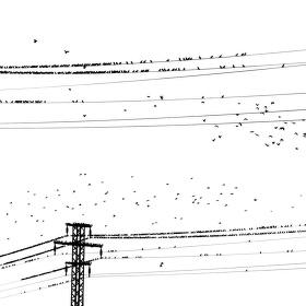 čierne na bielom: vtáci v el. sieťach