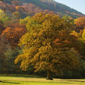 Podzim v oboře Hukvaldy