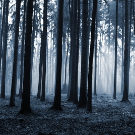 Mezi stromy