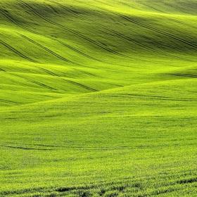 zelené vlnobytí