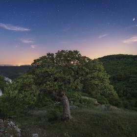 Dub šípák pod hvězdnou oblohou