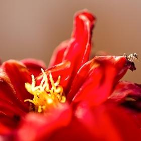 Mravenec a květina