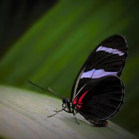 Hedvábná křídla