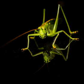 Grasshopper in the darkness