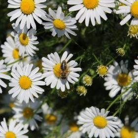 Včela - klenot přírody