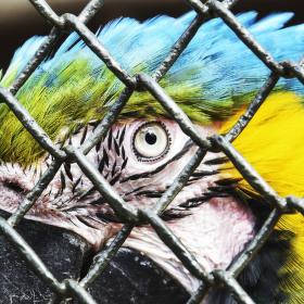 Oko krásky z Jižní Ameriky