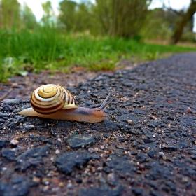Malý šnek a jeho dlouhá cesta