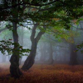...lesní romantika