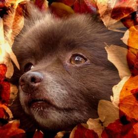 Podzimní zasnění