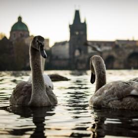 Klidné ráno pod Karlovým mostem