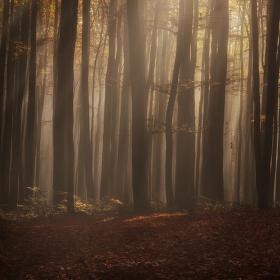 V tajemném mlhavém lese ...