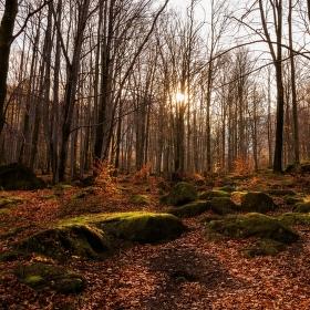 Cestou k Černému potoku