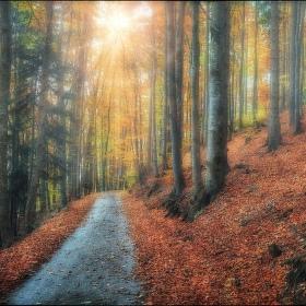 Po cestách podzimu VI