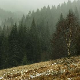 Mlhavá Šumava