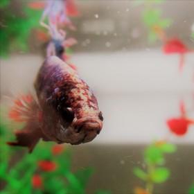 Fishh