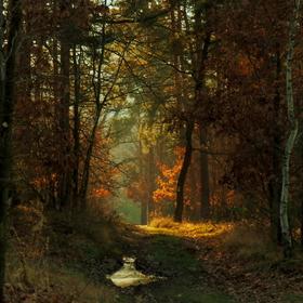Barvy lesa