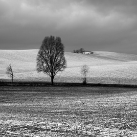 Černobílá zima