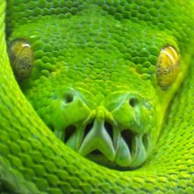 zelené smyčky